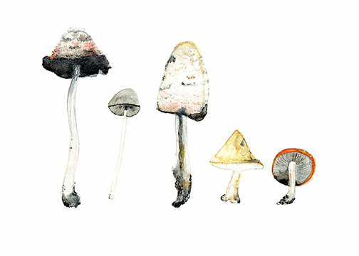 Mushrooms watercolour by Australian artist Jennifer Ross aka Winter Owls