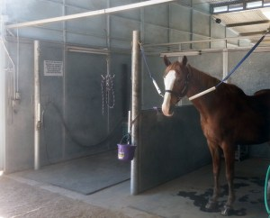 Shower for Boarded Horses