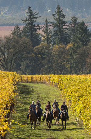 Winters-hill-horses