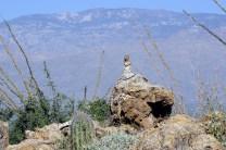 1082 Ground Squirrel, Near Tuscon, Arizona.