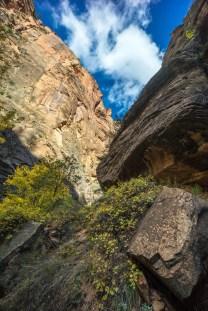1025 Zion Utah Looking up