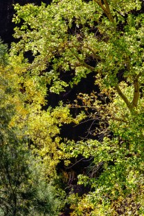 1029a Trees at Zion