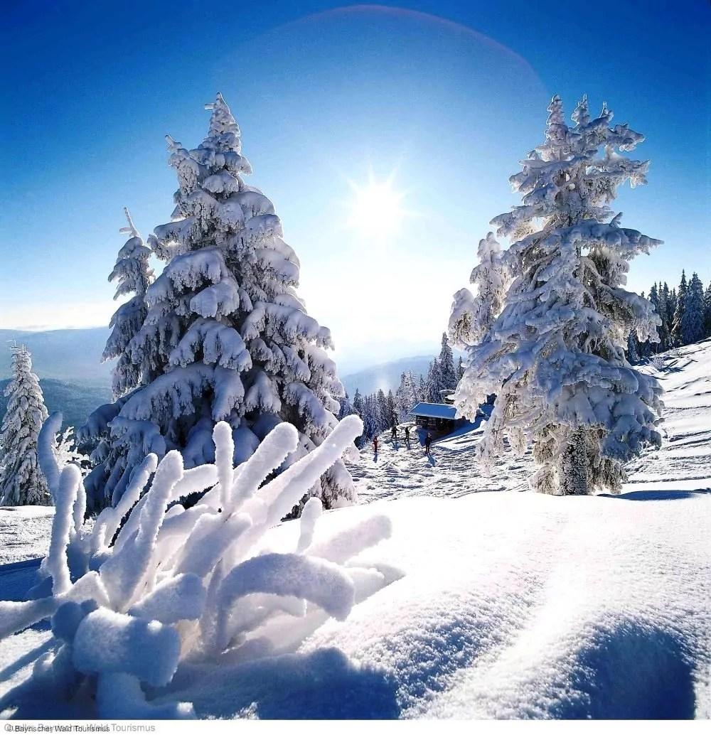 wintersport en aanbiedingen in Waldmünchen