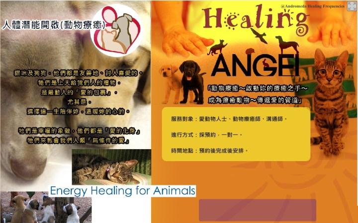 Animals-Healing-accupass