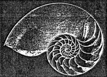 螺旋線-鸚鵡螺的橫截面