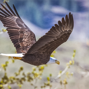 go birdwatching in winthrop wahsington bring your camera