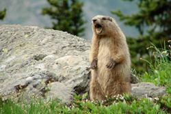 nature studies winthrop washington Wildlife of the North Cascades