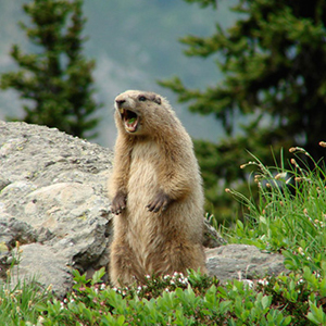 learn about wildlife and nature in Winthrop Washington