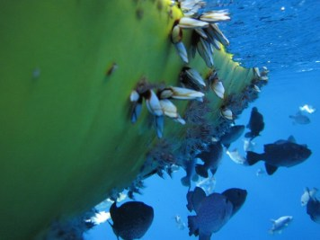 Życie w oceanie kwitnie wszędzie