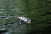 Po drodze wyławiamy z wody butelkę z listem, unoszącą się na falach!