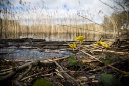 Mazury cud natury (fot. Katarzyna Ugorowska)