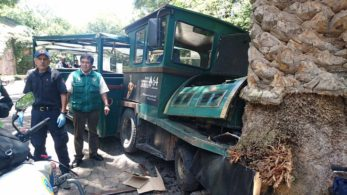 Tren verde choca contra palmera