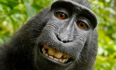 """Fotógrafo """"humano"""" se gana los derechos del """"selfie del mono"""""""