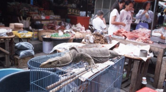 Ganancias por tráfico ilegal de animales puede superar al de drogas o armas 175119313