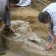 cráneo de mastodonte