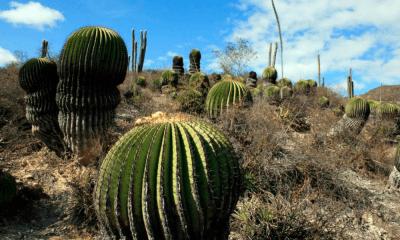 valle de Tehuacán-Cuicatlán como Patrimonio de la Humanidad