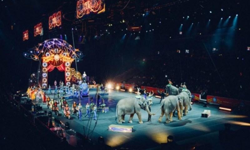 Denuncian a circo por maltrato animal, eran peluches Denuncian-a-circo-por-maltrato-animal