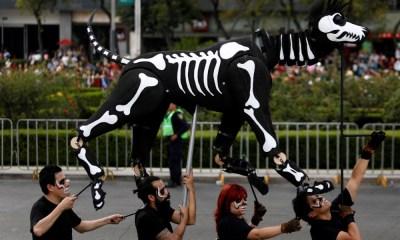 Día de Muertos para mascotas