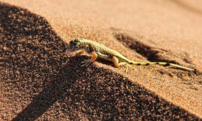 Mueren especies en el desierto de Atacama