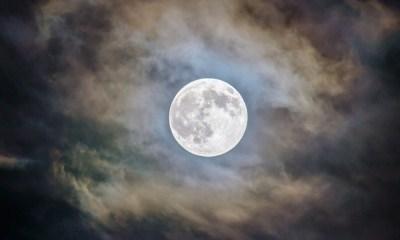 Semilla de Algodón brotó en la Luna