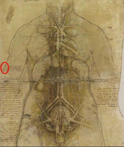 Encuentran huella dactilar de Leonardo Da Vinci en una de sus obras leonardodavincihuella-505x600