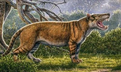 fósil de un mamífero gigante en África