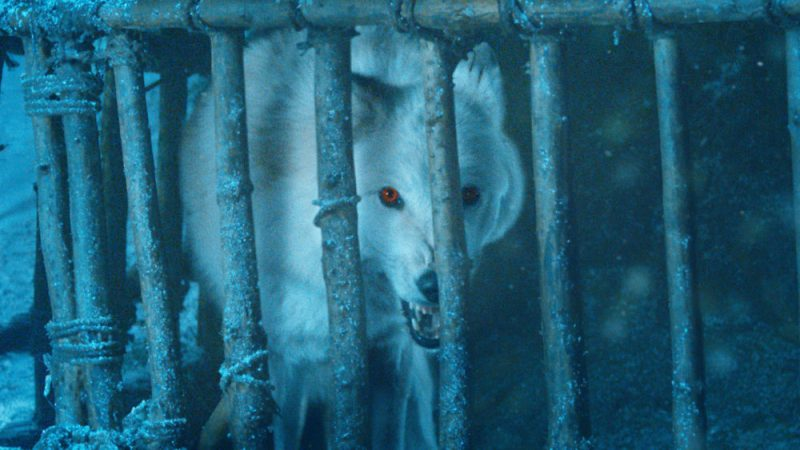 Tyrion pidió que no compren huskies por ser parecidos a los lobos Direwolves de 'GOT' GAME-OF-THRONES-S4-EP-4