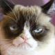 Falleció Grumpy Cat
