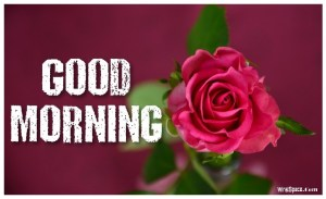 good morning rose image