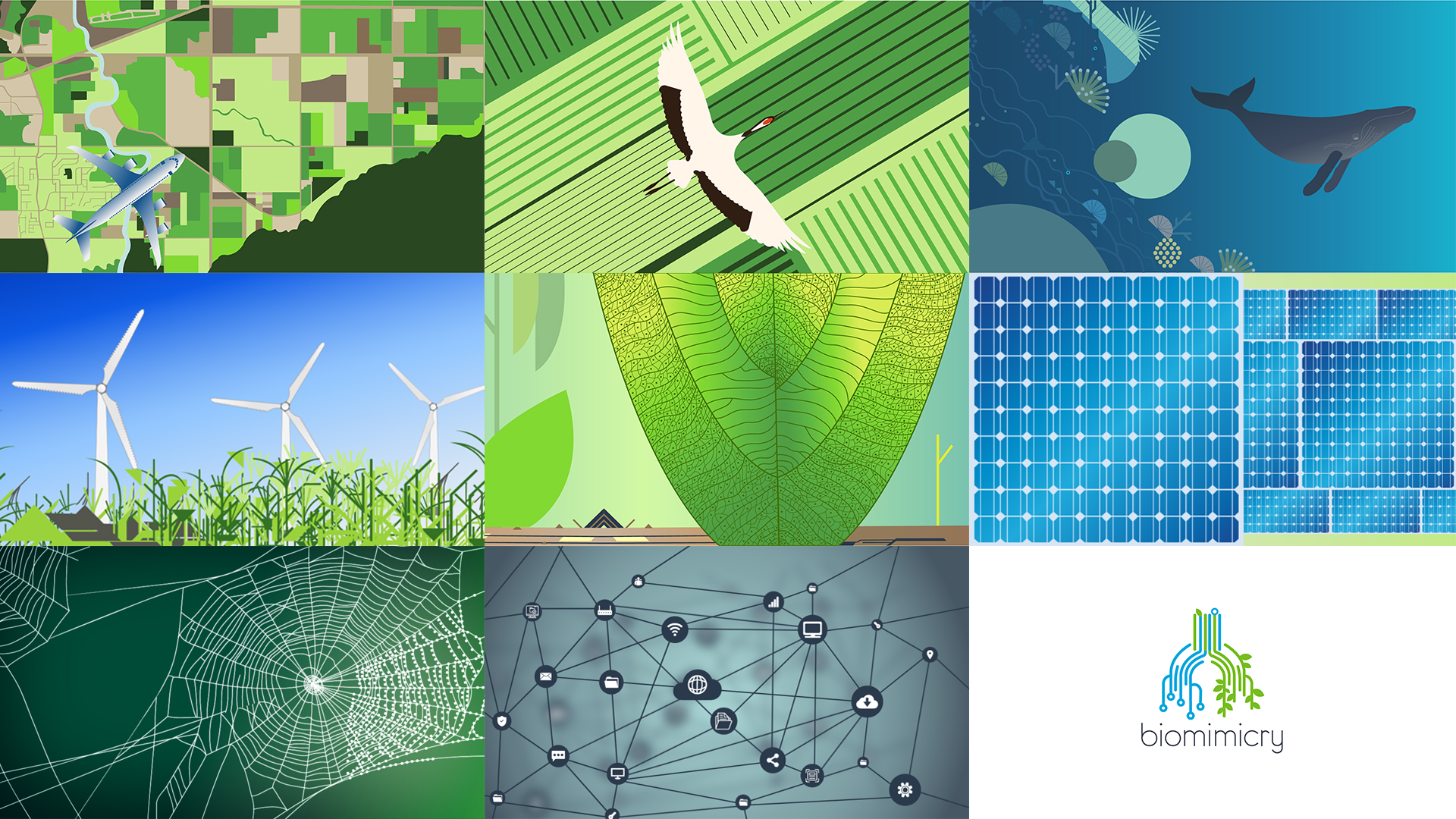 Biomimicry style frames
