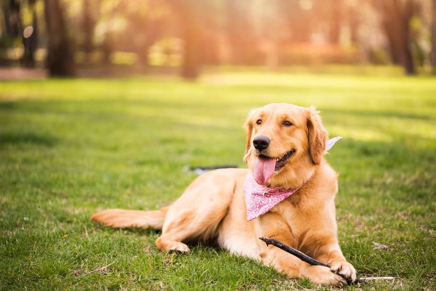 best long range wireless dog fence wireless dog fence guide