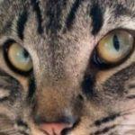 Profilbild von frechdachs