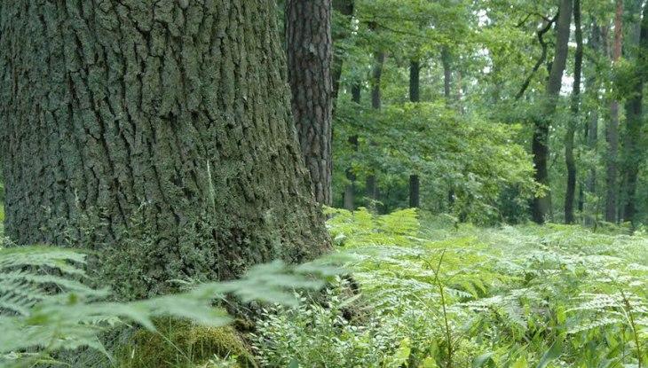 Friedwald im Schlosspark zu Pansevitz