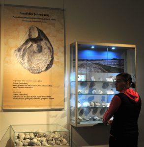 hv Im Kreidemuseum