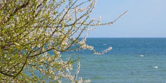 Darum lieben wir den Frühling auf Rügen