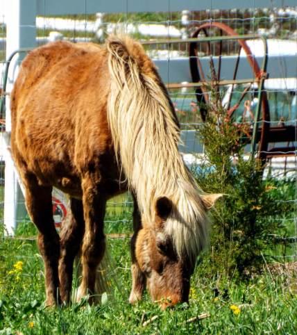 palomino pony 3