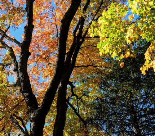 fall colors 2016