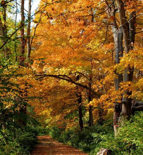 golden-path