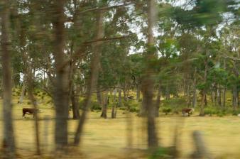Bäume...