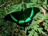 Schmetterliiiing