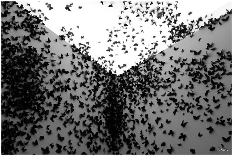 ButterfliesIIs