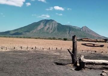 taman nasional baluran savana bekol