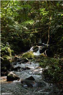 Sungai Curug Cibeureum