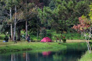 Camping Ground Mandalawangi Cibodas