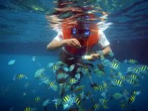 taman bawah laut pulau pahawang besar, taman nemo pulau pahawang