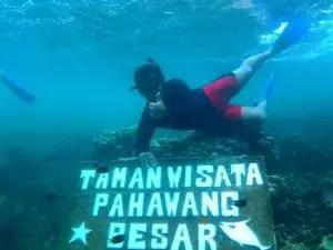 taman bawah laut pulau pahawang, taman nemo pulau pahawang, pemandangan bawah laut pulau pahawang