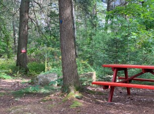 picnic table in the woods at Wiscasset Woods