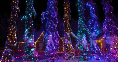 Christmas lights on trees at Gardens Aglow.