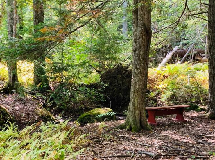 The bench on the trail at Wiscasset Woods Lodge