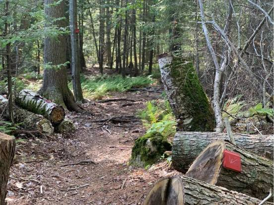 The trail cut through downed trees